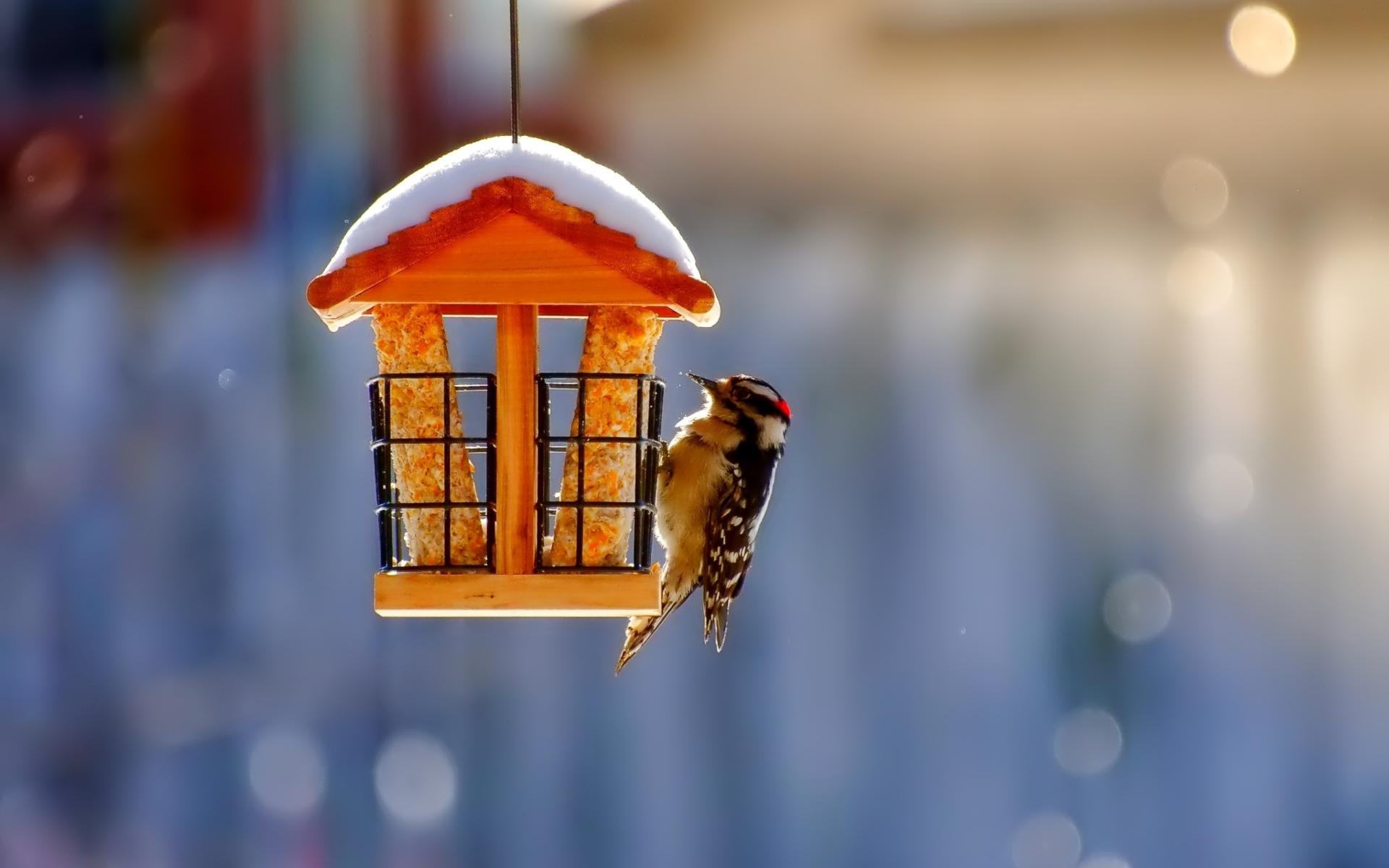 Winter Bird House Wallpaper for Widescreen Desktop PC ...