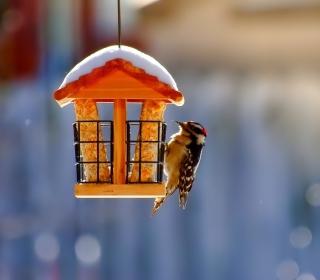 Winter Bird House - Obrázkek zdarma pro 208x208