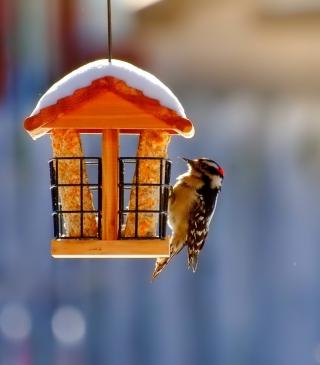 Winter Bird House - Obrázkek zdarma pro Nokia Lumia 820