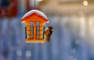 Winter Bird House - Obrázkek zdarma pro Widescreen Desktop PC 1920x1080 Full HD