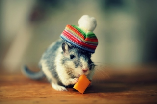 Free Mouse In Funny Little Hat Eating Cheese Picture for Android, iPhone and iPad