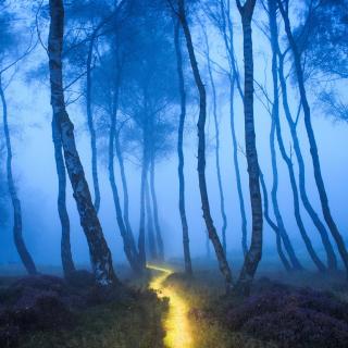Magic Forest - Obrázkek zdarma pro 2048x2048