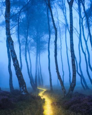Magic Forest - Obrázkek zdarma pro Nokia X3