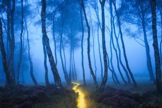 Magic Forest - Obrázkek zdarma pro Samsung Galaxy Ace 4