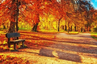 Autumn Park Wallpaper for Android, iPhone and iPad
