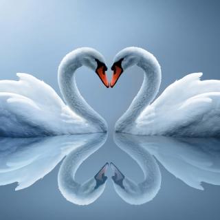 Swans Couple - Obrázkek zdarma pro 320x320