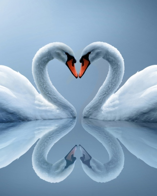Swans Couple - Obrázkek zdarma pro Nokia Lumia 505