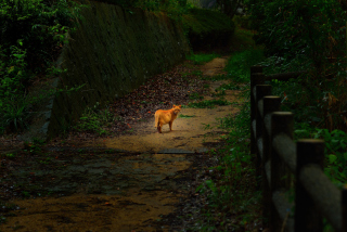 Golden Cat Walking In Forest Picture for Android, iPhone and iPad