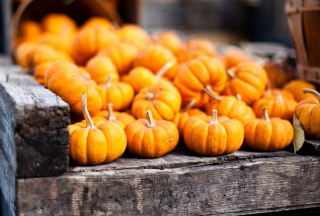 Cute Small Pumpkins Picture for Android, iPhone and iPad