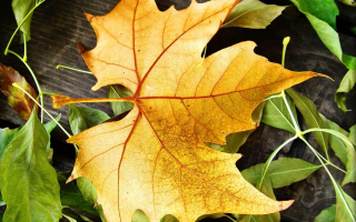 Yellow Foliage Background for Android, iPhone and iPad
