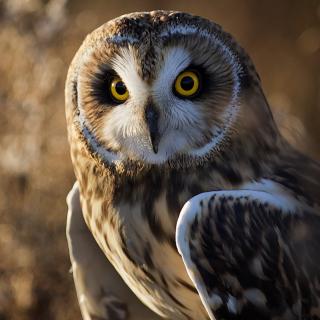 Owl - Obrázkek zdarma pro 128x128