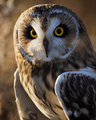 Owl - Obrázkek zdarma pro Nokia Lumia 1520