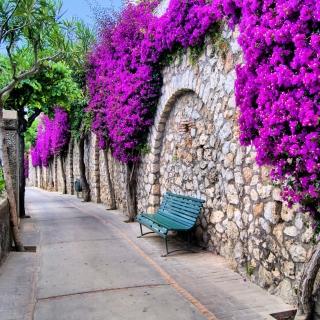 Iitaly flower street - Obrázkek zdarma pro 320x320