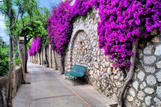 Free Iitaly flower street Picture for Android, iPhone and iPad