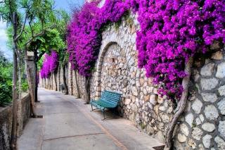 Iitaly flower street - Obrázkek zdarma pro Nokia Asha 302