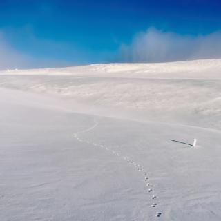 Footprints on snow field - Obrázkek zdarma pro 1024x1024