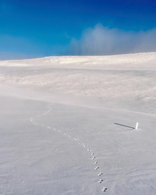 Footprints on snow field - Obrázkek zdarma pro Nokia Lumia 822