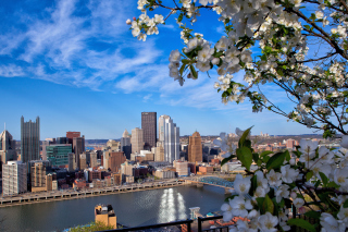 Free Pittsburgh Washington Picture for Android, iPhone and iPad