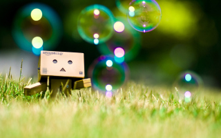 Danbo Picture for Android, iPhone and iPad
