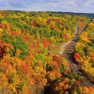 Autumn Forest in Kelowna - Obrázkek zdarma pro iPad mini 2