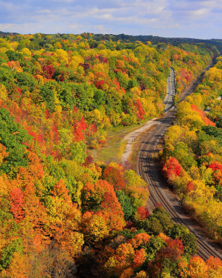 Autumn Forest in Kelowna - Obrázkek zdarma pro Nokia Asha 305