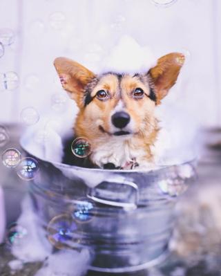 Dog And Bubbles - Obrázkek zdarma pro Nokia Asha 203