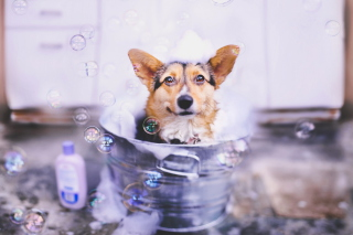 Dog And Bubbles - Obrázkek zdarma pro 1366x768