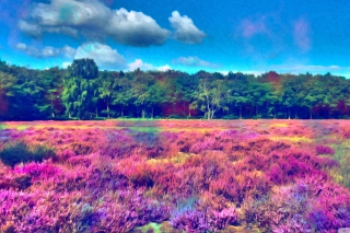 Field Of Color Picture for Android, iPhone and iPad