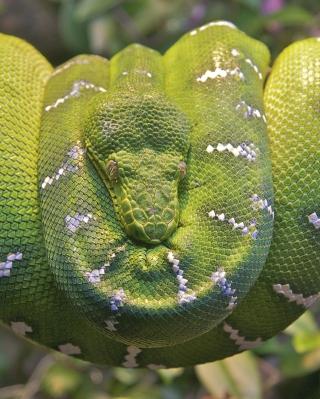 Emerald Green Tree Snake - Obrázkek zdarma pro 360x640