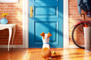 The Secret Life of Pets Background for Android, iPhone and iPad