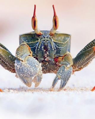 Ghost crab - Obrázkek zdarma pro iPhone 6