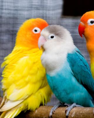 Colorful Parrots - Obrázkek zdarma pro Nokia X7