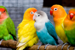 Colorful Parrots Wallpaper for Android, iPhone and iPad