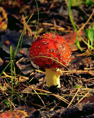 Red Mushroom - Obrázkek zdarma pro Nokia X6