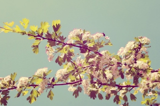 Картинка Cranberry Flowers на Android