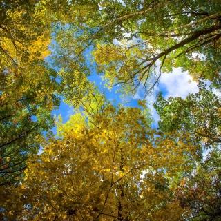 Sky and Trees - Obrázkek zdarma pro iPad mini 2