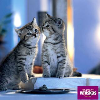 Whiskas Kittens - Obrázkek zdarma pro iPad 2