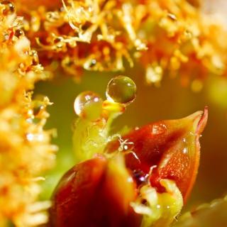 Flower with Drops - Obrázkek zdarma pro 128x128