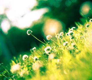 Sunny Field - Obrázkek zdarma pro 128x128