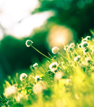Sunny Field - Obrázkek zdarma pro iPhone 4
