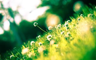 Sunny Field - Obrázkek zdarma pro Fullscreen Desktop 1280x1024
