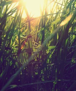 Grass Under Sun - Obrázkek zdarma pro Nokia C-Series