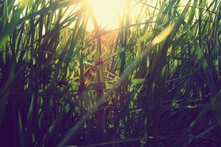 Grass Under Sun - Obrázkek zdarma pro Nokia XL