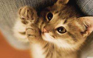 Картинка Lazy Kitten для телефона
