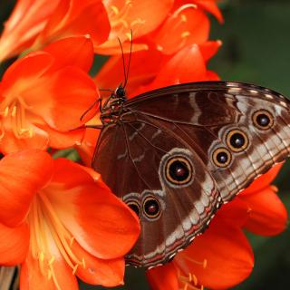 Butterfly - Obrázkek zdarma pro 128x128