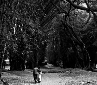 Romantic Walk - Obrázkek zdarma pro 320x320