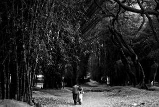 Romantic Walk - Obrázkek zdarma pro HTC Desire