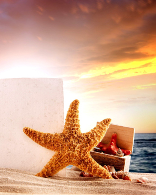 Seashell and Starfish Coastal Decor - Fondos de pantalla gratis para LG T325 Cookie