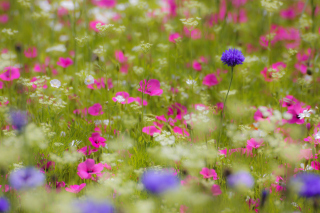 Pink Flowers Meadow Background for Android, iPhone and iPad