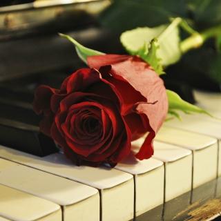 Rose On Piano - Obrázkek zdarma pro 208x208